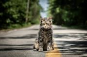 Il gatto di Pet Sematary