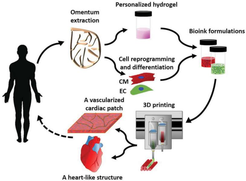Creazione e utilizzo del cuore stampato in 3D