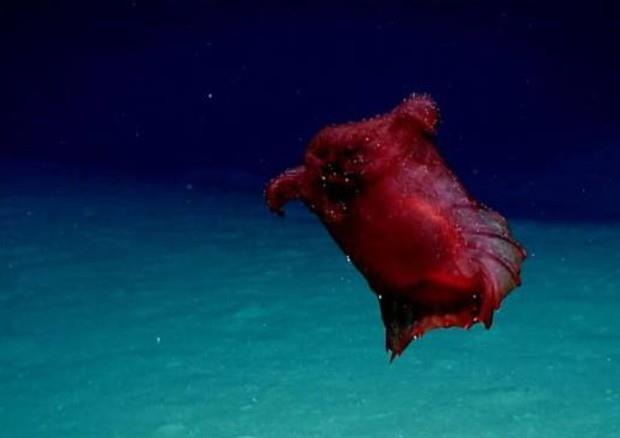 Un'immagine del presunto mostro pollo senza testa