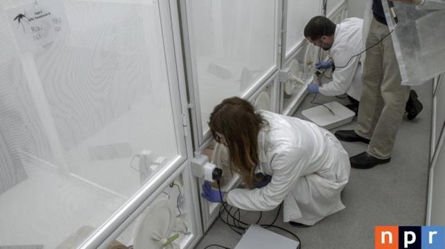 Alcuni ricercatori dei laboratori di Terni al lavoro sulla zanzara OGM