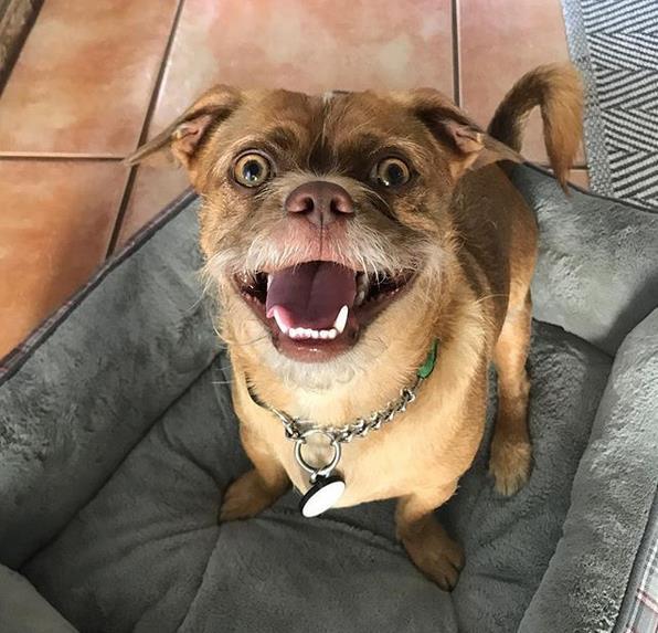 Bacon sorridente