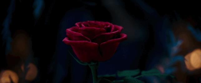 Emma Watson e la Rosa Incantata