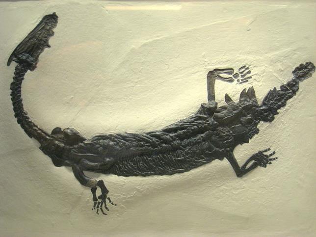 Il lariosauro fossile
