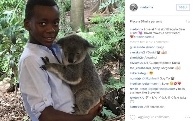 Foto di David con koala postata da Madonna su Instagram