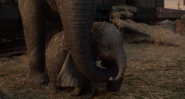 Dumbo e la madre