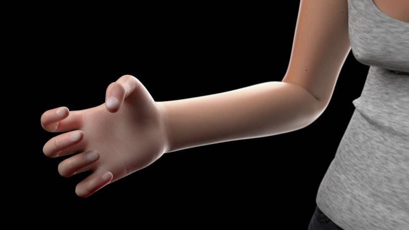 La ricostruzione virtuale di una mano umana secondo TollFreeForwarding.com