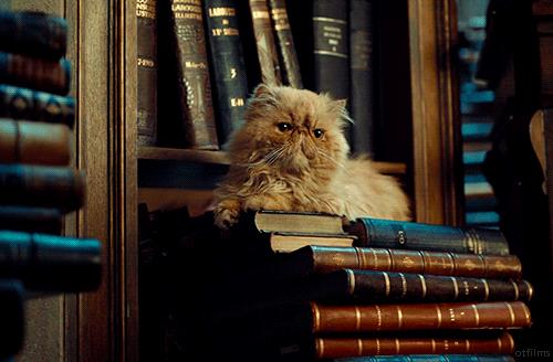 Un gatto seduo su una pila di libri