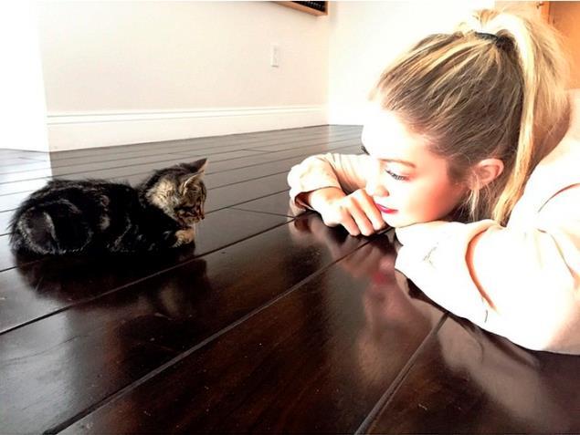 Gigi Hadid osserva un gattino
