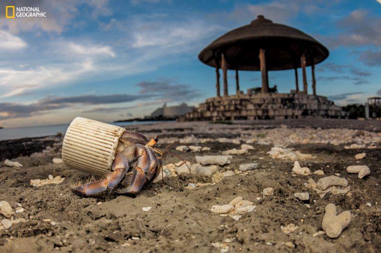 Nella foto firmata da Shawn Miller un granchio è rimasto imprigionato in un tappo di plastica