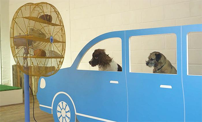 Cani alla mostra canina Play More