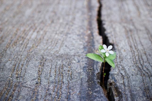 Fiore bianco che emerge dal legno