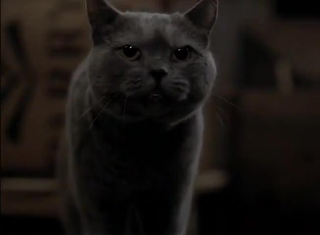 Il gatto Smokey