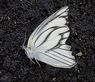 Copertina de Il giardino delle farfalle