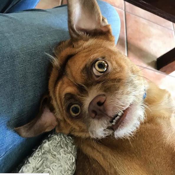 Bacon con sguardo ansioso