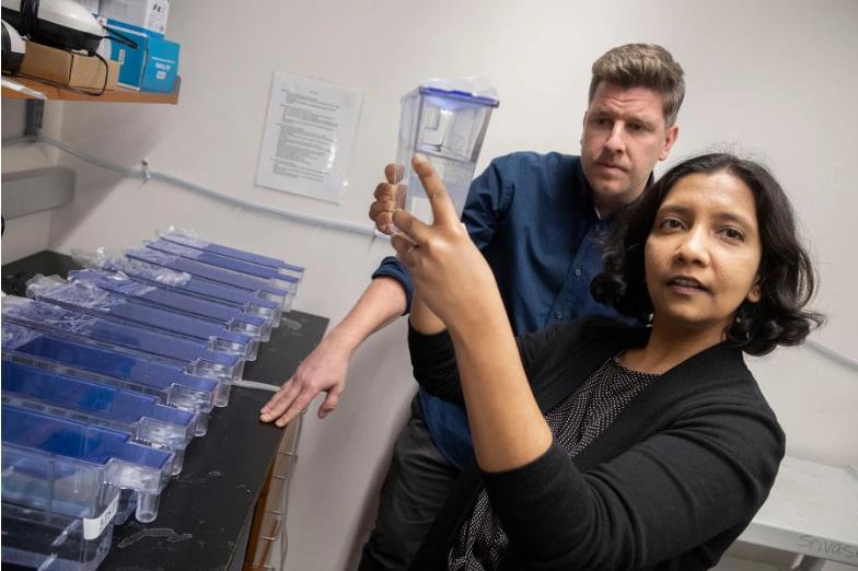 Gli scienziati Andrew Gehrke e Mansi Srivastava al lavoro sul verme pantera