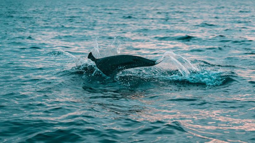 Delfino in mare