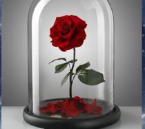 La rosa incantata de La Bella e la Bestia esiste davvero (ma non sfiorisce mai)