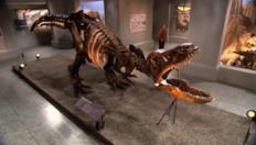 Avventura al museo