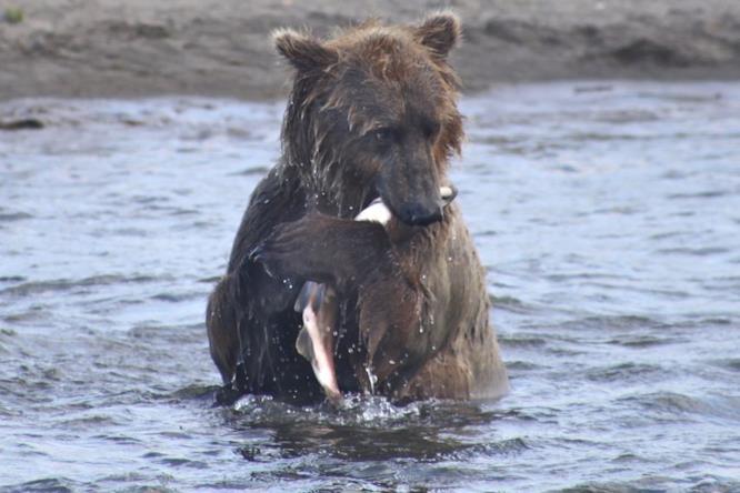 Kayaking Aleutians