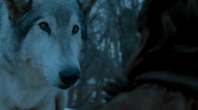 Nymeria, il metalupo di Arya Stark