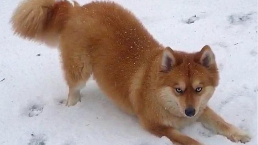 Una foto di Mya sulla neve