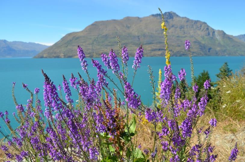 Un viaggio inaspettato, lago Wanaka
