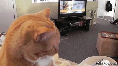 Gif di un gatto che è seduto sul divano