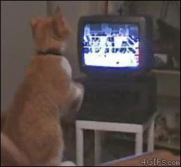 Gif di un gatto infervorato per la partita