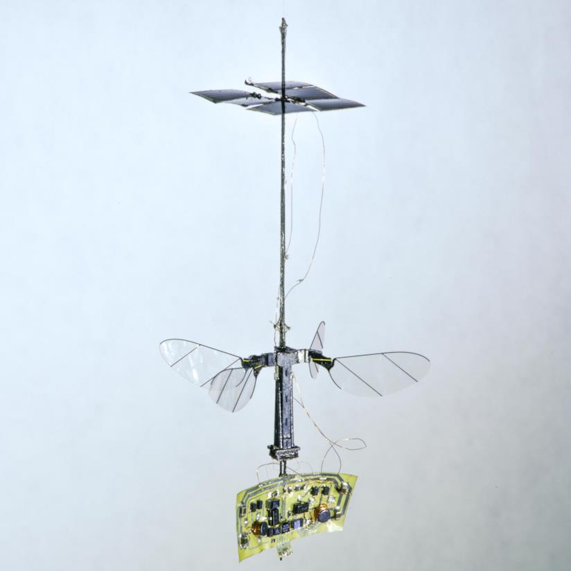 Un'immagine del drone insetto