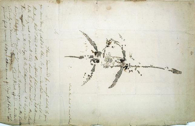 Uno schizzo del plesiosauro