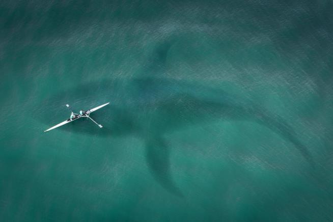 Un'immagine di un megalodonte realizzata da SarahRichterArt