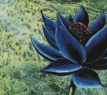 L'illustrazione ufficiale del Black Lotus di Magic: The Gathering