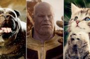 Lockjaw, Thanos e un gattino che prega