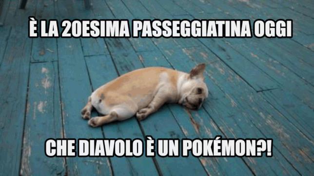 Le troppe passeggiatine causa Pokémon GO sfiniscono un povero cagnolino