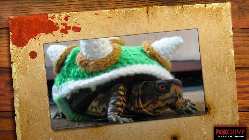 Ama travestirsi... da tartaruga.