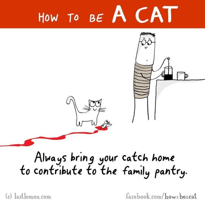 Vignetta umoristica di un gatto che porta la sua preda al padrone
