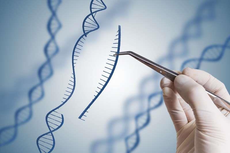 """Una sequenza di DNA viene """"metaforicamente"""" inserita in una doppia elica di DNA"""