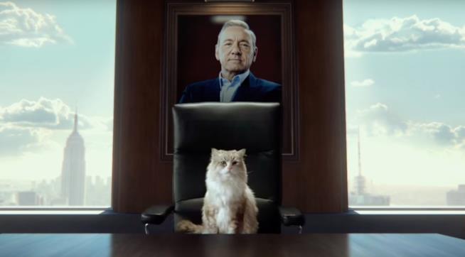 Kevin Spacey e un gatto