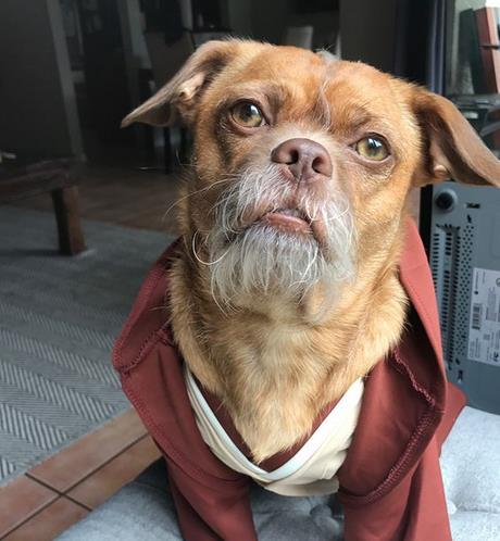 Bacon che indossa una felpa
