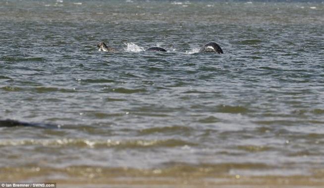 foto del mostro di Loch Ness