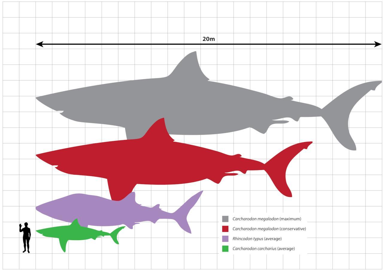 datazione di un Consiglio di pesci uomo sito di incontri geek online