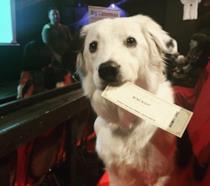 Una grazioso cane all'interno della sala del K9 Cinemas