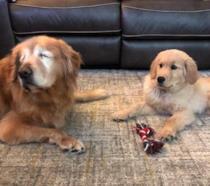 Charlie e Maverick, una foto dal loro profilo Instagram