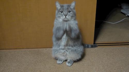 Una divertente gif di un gatto che prega