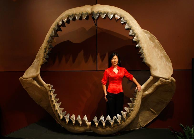 I 180 denti fossili di un Megalodonte