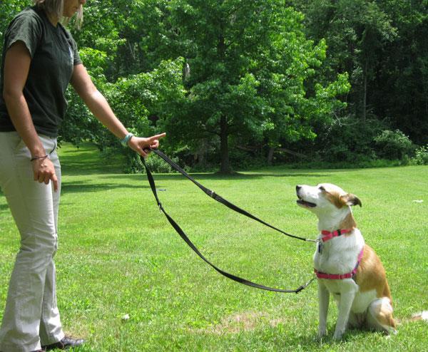 Un cane mentre viene addestrato