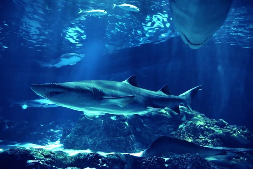 Primo piano di uno squalo in un acquario