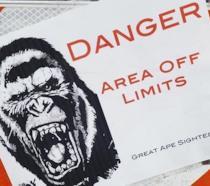 Una foto mostra il pericolo Kong del crossover del MonsterVerse