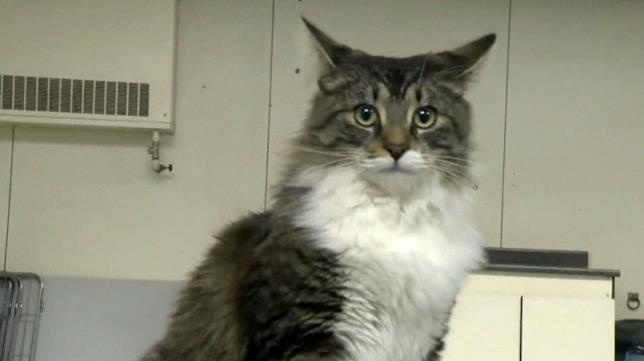 Baloo, il gatto che si è fatto spedire lontano da casa