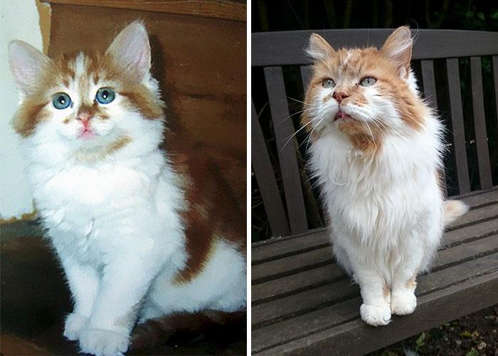 Un confronto per Rubble, il gatto trentenne